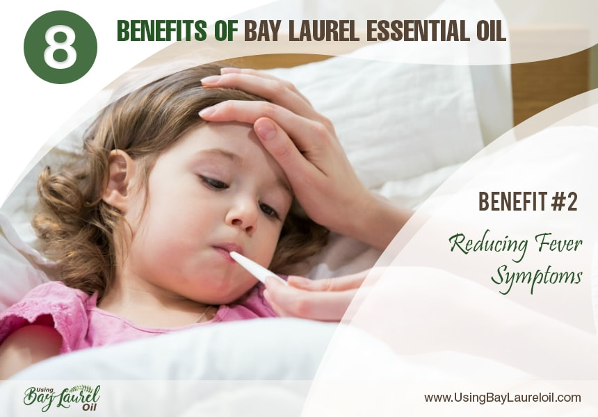 bay laurel leaf essential oil